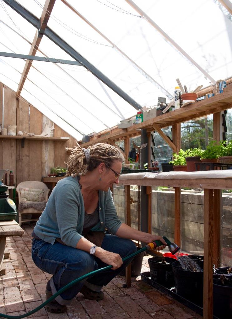 watering Dahlia tunbers